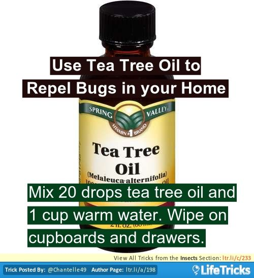 Insects - Use Tea Tree Oil to Repel Bugs in your Home