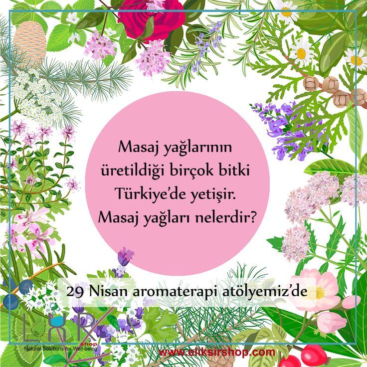 Masaj yağlarının üretildiği birçok bitki Türkiyede yetişir.Masaj yağları nelerdir? 29 nisan aromaterapi atölyemizde
