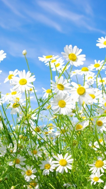 God cares about the smallest of daisies to the biggest of elephants.