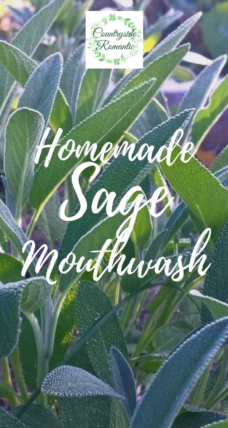 Homemade Sage Mouthwash in Creating and Using Herbal Infusions from Countryside Romantic . . . #herbalism #herbs #infused #diy