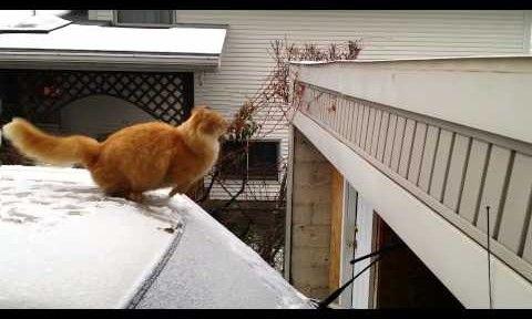 A macska, akin az egész internet röhög!