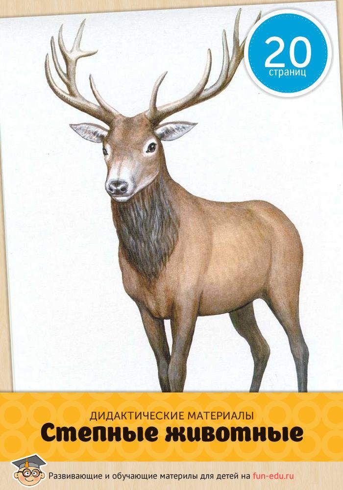 """Карточки «Животные степи"""" помогут малышу разобраться в видах обитателей одной из климатических зон. Распечатайте картинки на цветном принтере."""