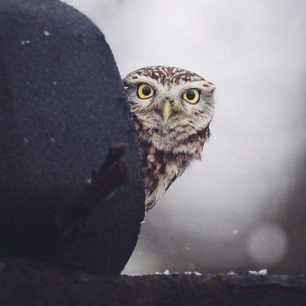 Les moments privilégiés d'un photographe avec les animaux dans les forêts finlandaises