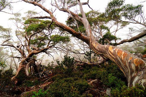 Mount Field National Park, Tasmania [via Flickr Blog]