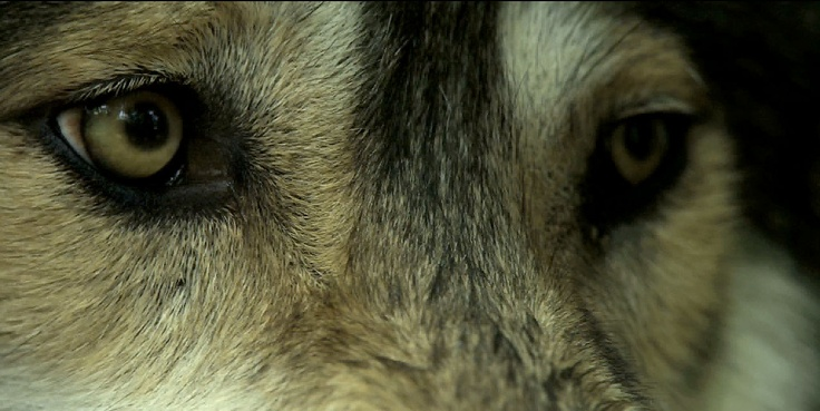 la ternura de un animal reflejada en su mirada