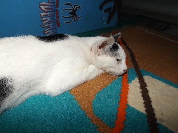 foto kucing masbadar.com 08