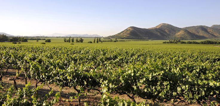 Viña Santa Rita Chile - Valle Maipo