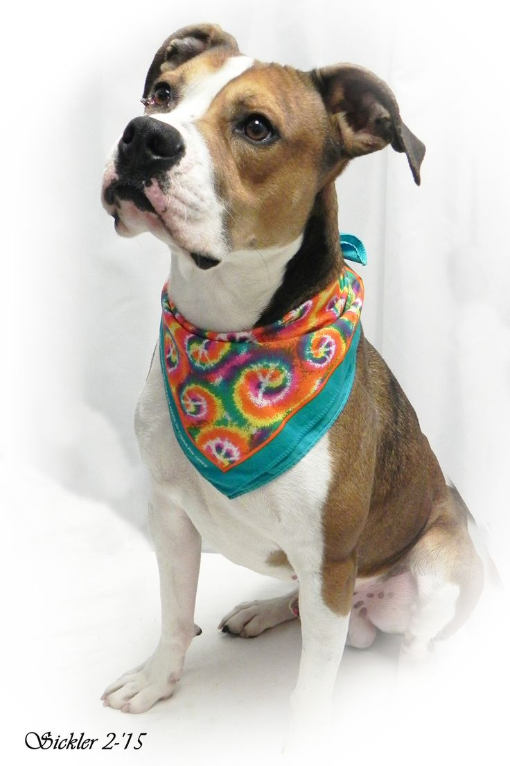 ***SUPER SUPER URGENT!!!*** - PLEASE SAVE DOUG!! - EU DATE: 5/31/2015 -- Doug Breed:Boxer (mix breed) Age: Adult Gender: Male Size: Large Shelter Information: City of Emporia Animal Shelter 1216 Hatcher  Emporia, KS Shelter dog ID: doug Contacts: Phone: (620)3406345 Name: Shelter Staff email: ashelter@emporia-kansas.gov  Read more at http://www.dogsindanger.com/dog/1426557535127#foSxUoM2LR9w40Cu.99