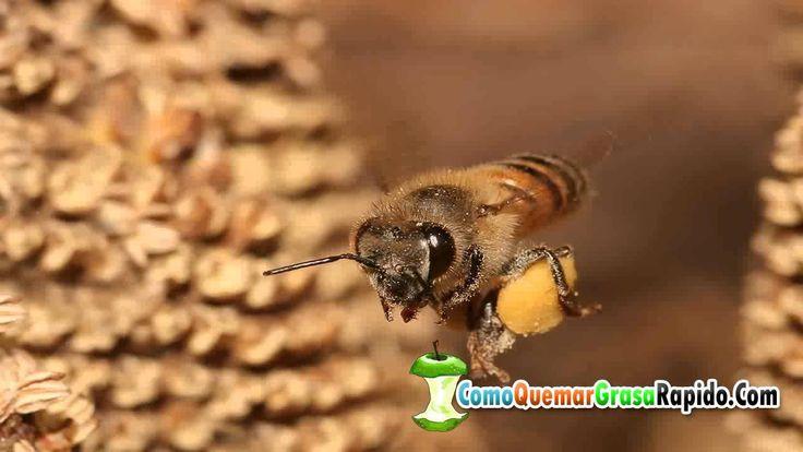 Que hace la miel en la cara - Propiedades de la miel en la piel  http://ift.tt/1SEqotn  Quieres Recibir más Videos? SUSCRIBETE A MI CANAL =========== OTROS VIDEOS SUGERIDOS ============= #L4# #LC3# #LC3# #LC3# #LC3# =============================================== Que hace la miel en la cara - Propiedades de la miel en la piel. A continuación te detallamos los beneficios de comer miel. El último factor para que la miel de abeja no se descomponga depende de ti. BENEFICIOS DE LA MIEL COMO…