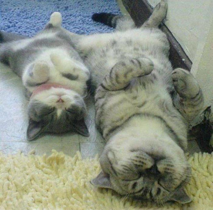 8. Un couple de chats qui se balade dans le jardin et un autre qui dort sur le dos !