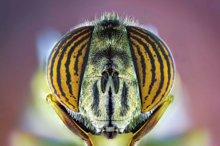 Desafio Criativo: Fotografias macro de insetos revelam detalhes impressionantes, por Paulo Latães