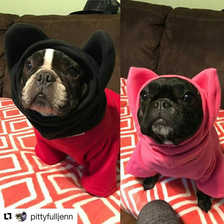 Mickey Mouse & Miss Piggy. @froodieshoodies thank you so much for this perfect creation.  #FrenchiesOfInstagram #frenchbulldoglovers #mickeymouse #misspiggy #froodieshoodies