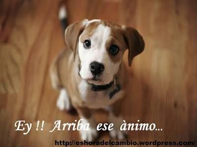 Ey!! Arriba ese Animo... http://eshoradelcambio.wordpress.com/