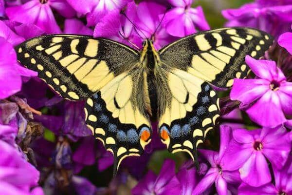 Descubre TODO SOBRE LAS MARIPOSAS. Te explicamos todo lo que debes conocer de estos bellos y coloridos insectos voladores.