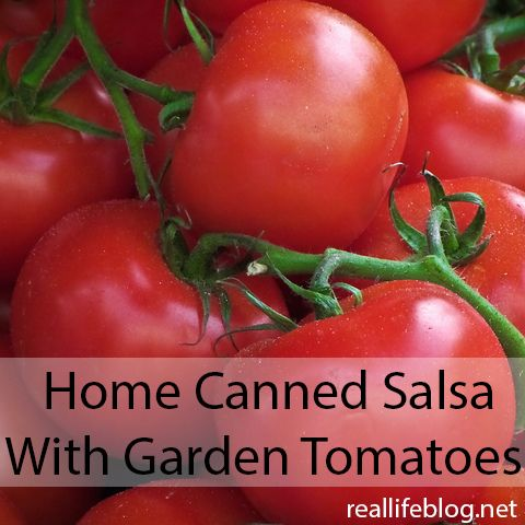 Recipe: Homemade Canned Salsa