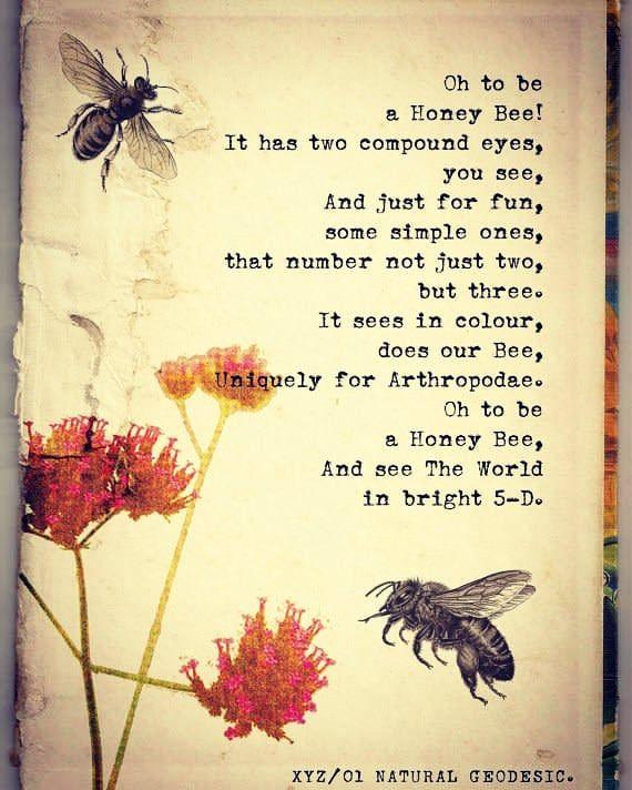 Good night #bee #beelicious #honey #morethanhoney #bees #gogreen #beekeeper #api #savethebees #poem #gardeningmakesmehappy #gardengrove #beekeepinggirl #honeylove #honeybees