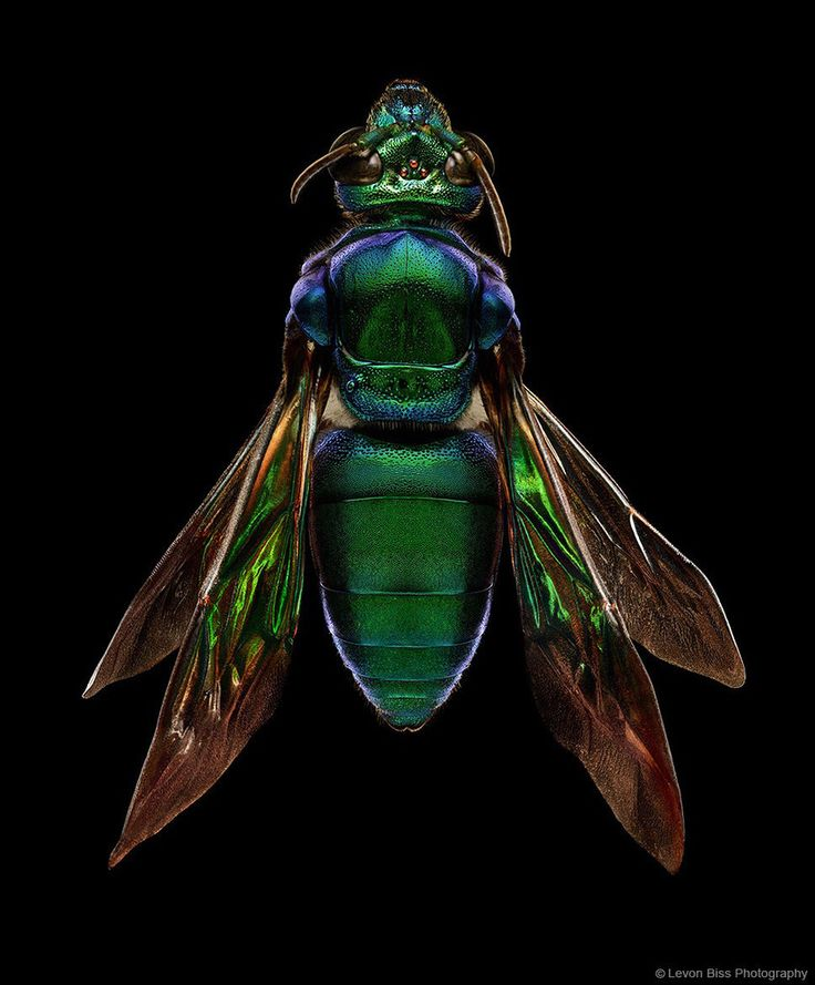 Levon Biss insect portraits – Hairpik Creative