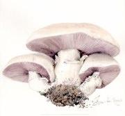 Helen Fitzgerald - Mushroom trio 289