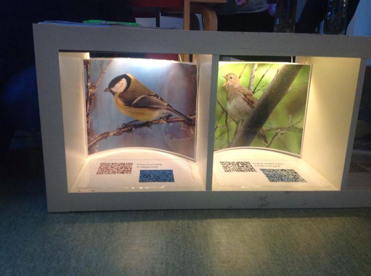 På Sinnestorget kan vi även få höra fåglarnas läten med qr-koder! #utforskande #digitalteknik #qr-koder