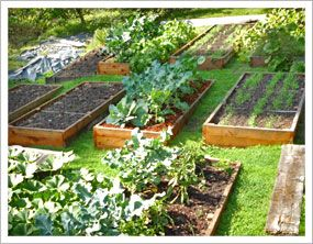 Great advice for raised bed gardening... suggestion: beds should be horizontally facing south for equal opportunities of plants access to the sun's rays.