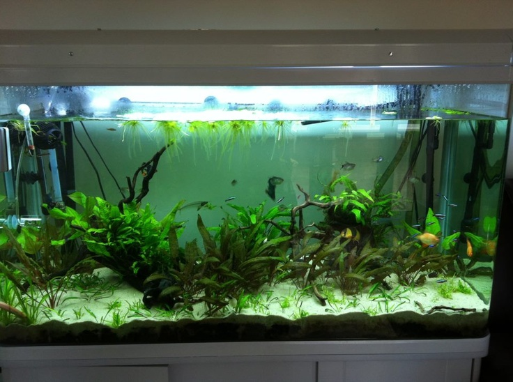Matthew's All Pond Solutions tank!