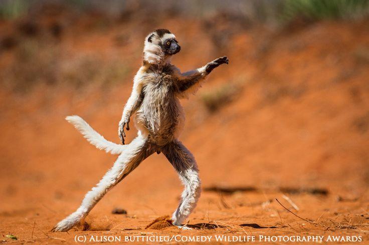 IL esittelee vuoden koomisimmat eläinkuvat - kiihdyttävä jyrsijä vei voiton