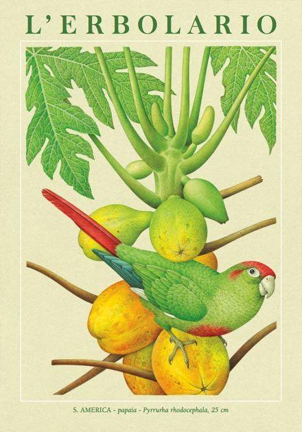 Calendario 2008: i pappagalli hanno viaggiato molto, sulle spalle degli esploratori, così come gli alberi, i cui semi sono stati trasportati dalle onde, dagli uomini e dagli animali. Il viaggio è il tema del Calendario 2008 Erbolario