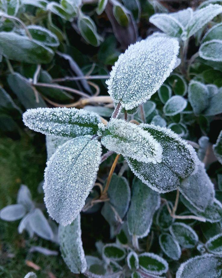 Cool Winterbilder winter kalt frost salbei pflanze gr n