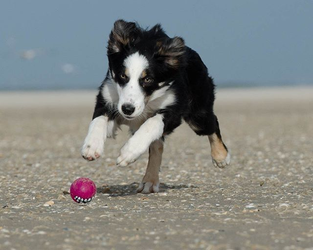 Embrace Your Petboarding Needs And Contact Animalfriendspetcare Today To Get The Bestinthebusiness Working With You Gi Border Collie Facts Dog Shaking Dogs