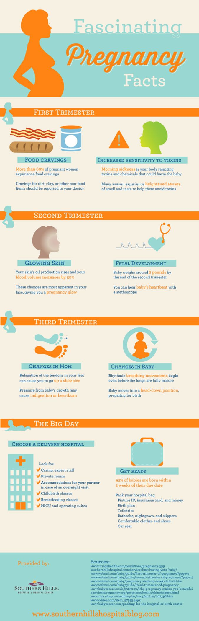 Quick Facts About Pregnancy