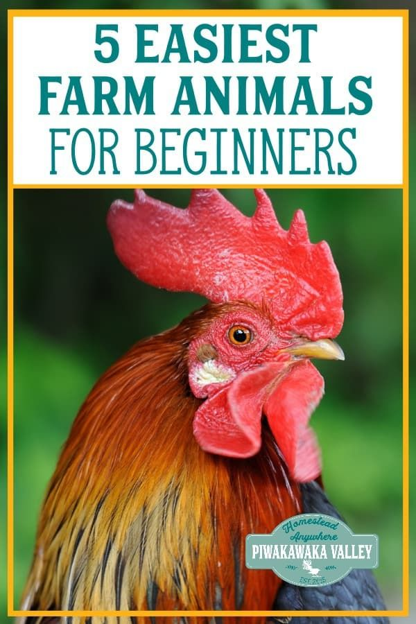 if you are starting a homestead or want to raise animals these are rh pinterest com