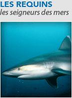 Les requins dans le monde