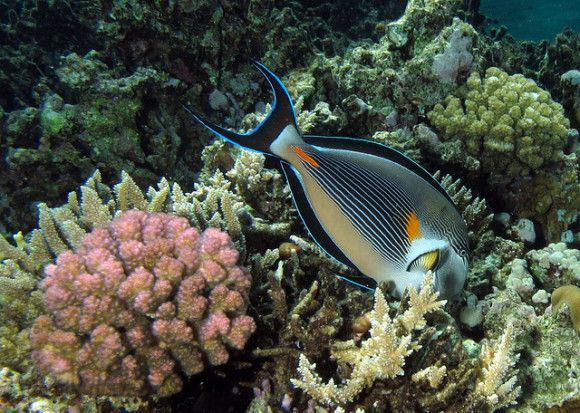 5 sfaturi pentru fotografii subacvatice mai reusite