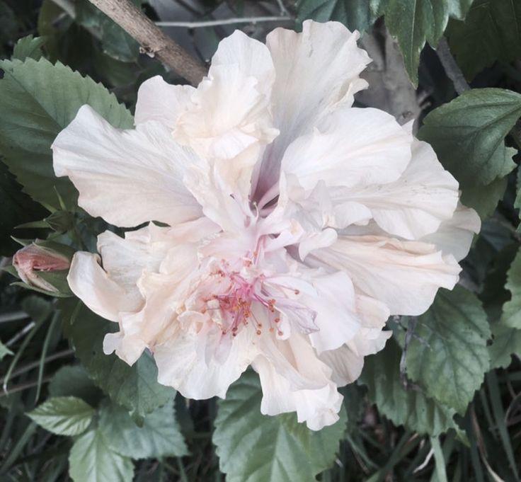 how gorgeous!🌸🙌🏼 #flower