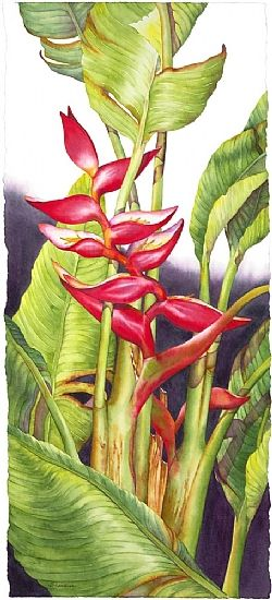 Dancing Heliconia #1 by Barbara Groenteman Watercolor ~  x