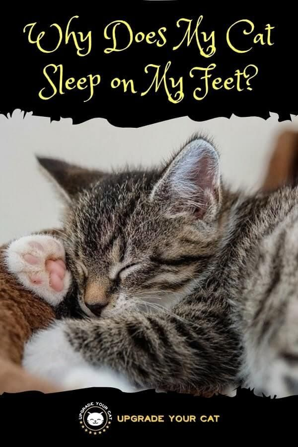 Why Does My Cat Sleep On My Feet You Re Not Alone Upgrade Your Cat Cat Sleeping Sleeping Kitten Cat Behavior