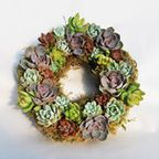 Succulent Wreath by Conceptual Nature - Modern - Wreaths And Garlands - by Etsy