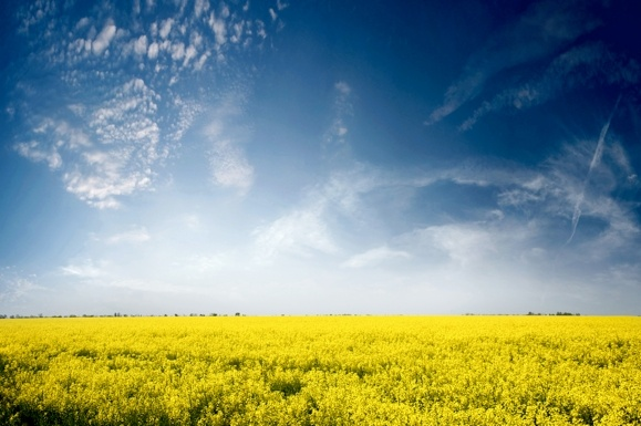 EU Industry Leaders and II Generation Biofuels for More Sustainable Transport