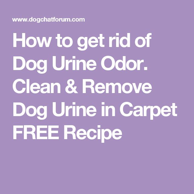 Dog Smell Of Rug: 25+ Best Ideas About Dog Urine On Pinterest