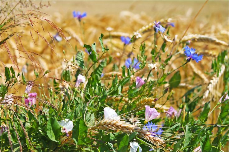 Unkräuter sind Pflanzen, deren Nutzen noch nicht erkannt ist. Diese 10…