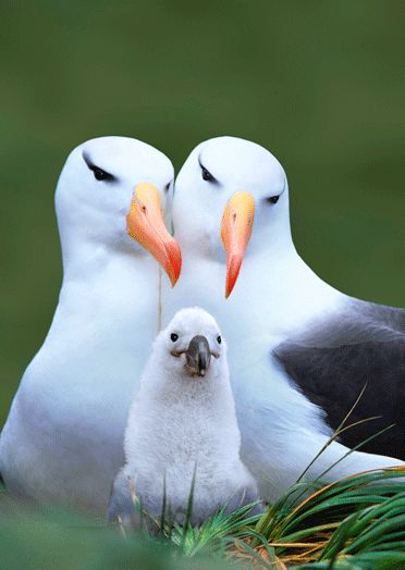 Oh Mah Gawd! This is perfection! #lifegoals #albatross