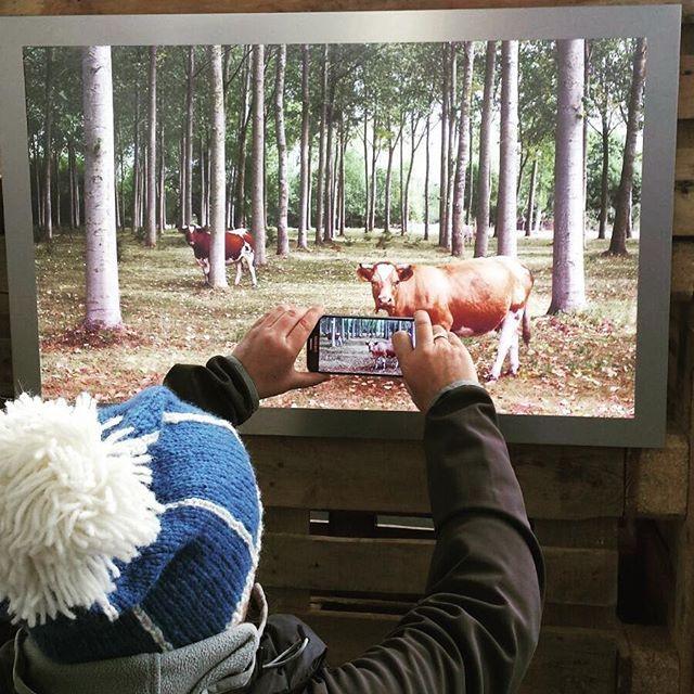 #aufschlag2016 #kühe #kuh #ichliebekühe #fotoausstellung #Hamburg #Fotografie ich muss die Kühe haben, wer hilft mir bitte?