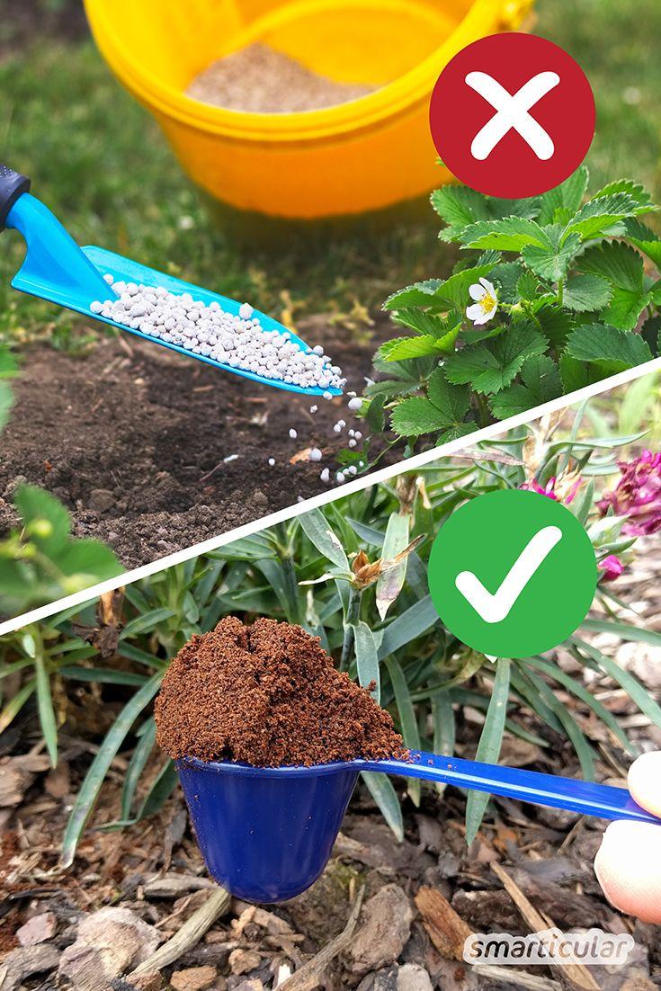 Statt Kunstdünger: Natürlich düngen mit Pflanzen und Küchenabfällen