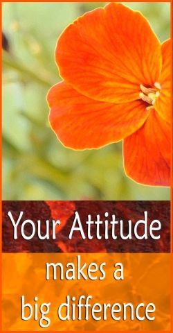 Quotes About Positive Attitude show you the immense power your attitude has over your success in life.    Quotes on positive thinking show us clearly...