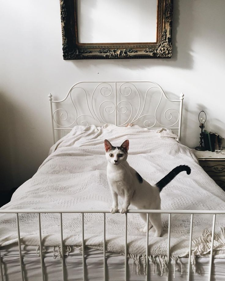 1000+ Ideas About Cat Bedroom On Pinterest