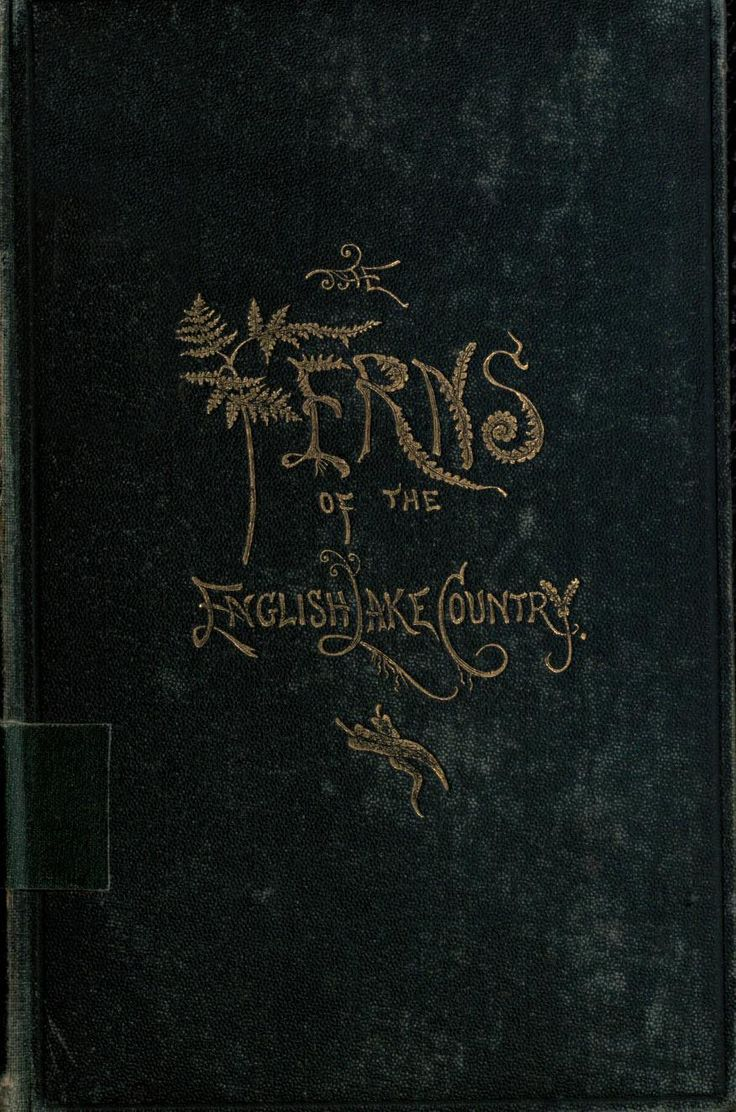 Gorgeous book cover | 'The Ferns of the English Lake Country' (1865) by W.J. Linton.