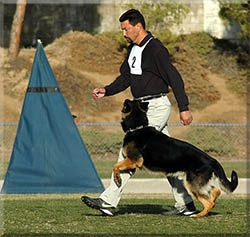 United Schutzhund Clubs of America - For the German Shepherd Dog