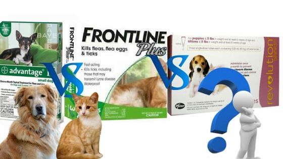 Advantage Vs Frontline Plus Vs Revolution – What is best for Dogs and cats  #advantage #frontlineplus #revolution #dogs #cats
