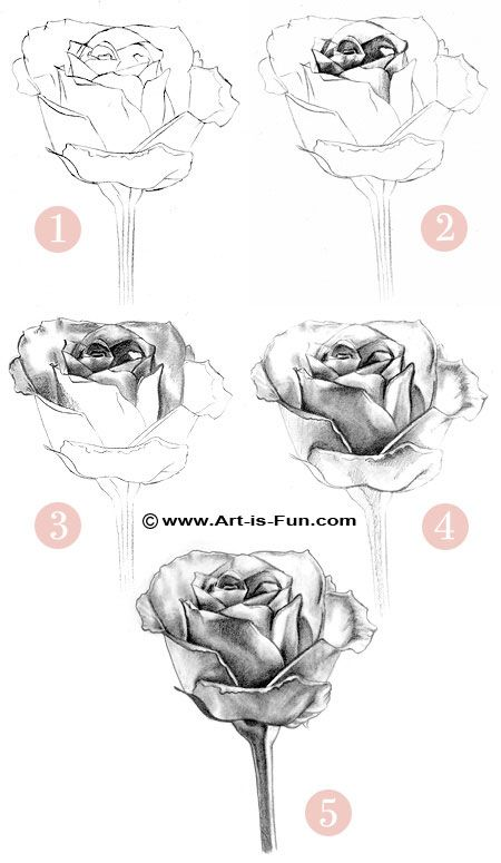 Learn how to draw a rose! Learn the steps to creating your own rose pencil drawings using basic supplies you have around the house.