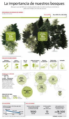 La importancia de los bosques | Infografía | Infografias - Las mejores infografias de Internet - Internet Infographics